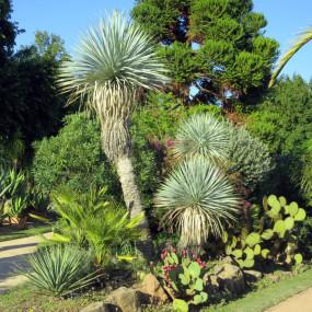 Une oasis tropicale réalisée avec des végétaux très graphiques résistant parfaitement aux rudes conditions climatiques de notre région.