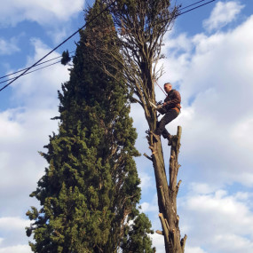 Elagage suivi d'un démontage d'un cyprès mort de 15 m de haut et présentant des risques multiples compte tenu de sa situation (fils électriques, cabanon...)